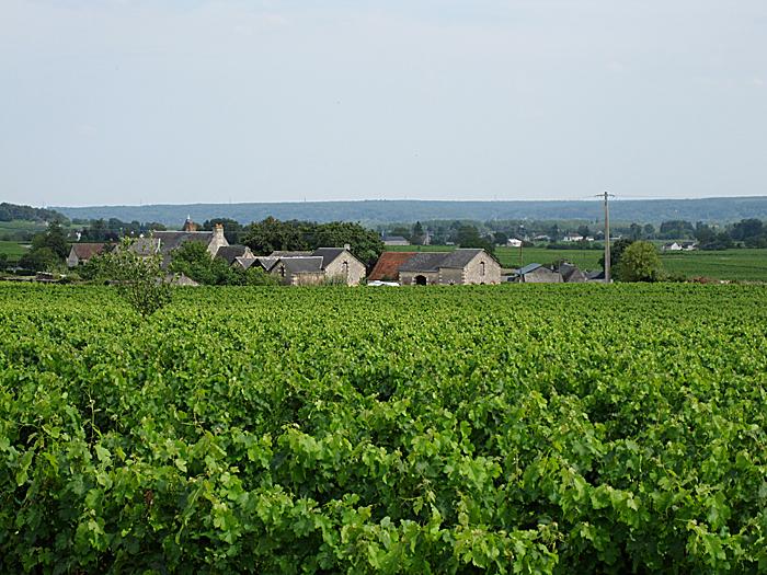 Midt i bildet kan du skimte bobilen på dens første vingårdsbesøk. Foto: Knut Randem.