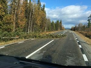 Sterk vind på veien hjem gjennom Sverige.