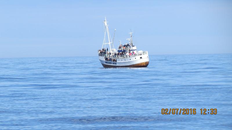 På hvalsafari.